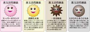 活性酸素4種類.jpg