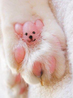 犬の肉球.jpg